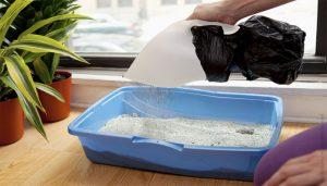 chuẩn bị khay cát cho mèo đi vệ sinh
