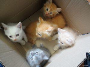 mèo ald lai mèo ba tư