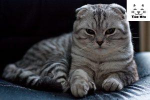 Lựa chọn phương pháp thể dục thể thao cho phù hợp với mèo anh lông ngắn (aln)