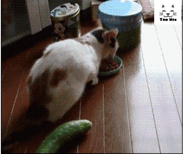 Tại sao mèo lại sợ dưa chuột